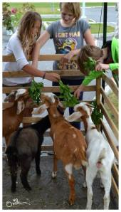 Children with the Elishka Goat Farm goats