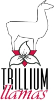 trillum-logo-copy